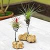 Подставка-камень для Тилландсий - атмосферных растений, фото 2