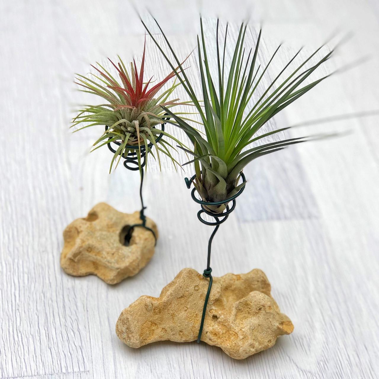 Подставка-камень для Тилландсий - атмосферных растений