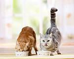 Чем кормить кота: соя или мясо?