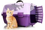 Транспортировка котенка