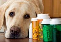 Витамины для старых собак