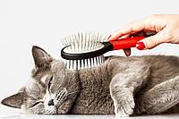 Уход за кошкой: кормление, купание, лечение