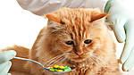 Нужны ли кошке витамины?