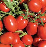 Семена томата Дельфо F1, Nunhems 1 000 семян