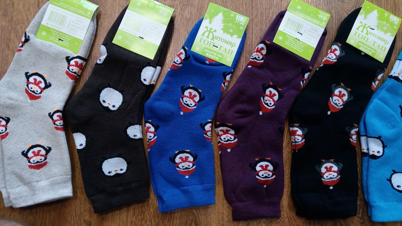 """Шкарпетки жіночі, махрові """"Топ-Тап Пінгвінчики"""" асорті"""