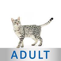 Royal Canin для взрослых котов