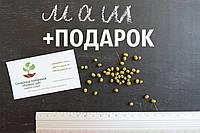 Маш семена (бобы мунг дал, золотистая фасоль)насіння (10 шт) Vigna radiata