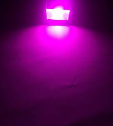 Світлодіодний фитопрожектор PREMIUM SL-10G 10W IP65 (full spectrum led) Код.58582