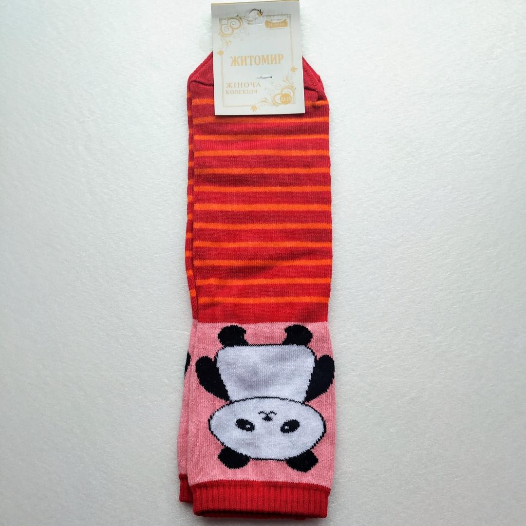 Носки женские Житомир 🐼 в красную полоску размер 35-40
