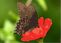 Схема для вышивания  на габардине Бабочка