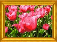 Схема для вышивания Тюльпаны