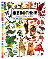 Животные. Учим цвета и цифры