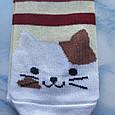 Носки женские котики вишнёвая полоска  размер 36-41, фото 3