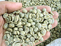 Кофе зеленый в зернах Малави ААА (ОРИГИНАЛ), арабика Gardman (Гардман) , фото 1