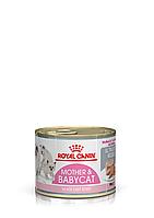 Royal Canin Babycat Instinctive Cans 195г *12 шт - мусс для котят до 4 месяцев