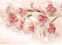 Фотообои *Престиж* № 67  Орхидея (196х272)
