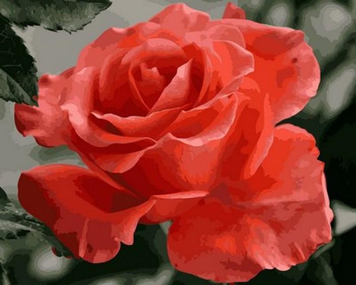 Картина по номерам Коралловая роза 40х50см Mariposa Turbo