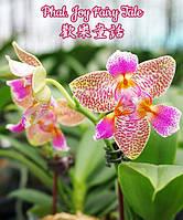 Орхидеи в наличии