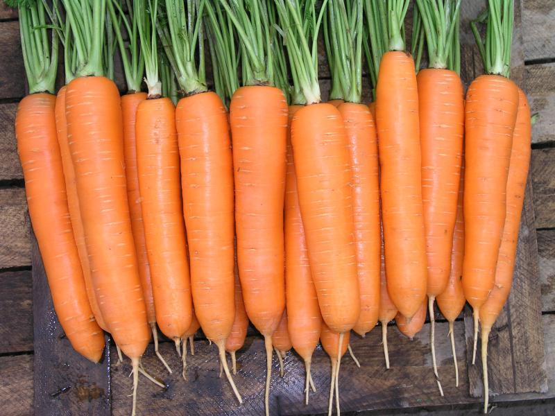 Семена моркови Элеганза F1, 100 000 семян (1.4-1.6), Nunhems