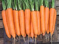 Семена моркови Элеганза F1, 100 000 семян (1.4-1.6), Nunhems, фото 1