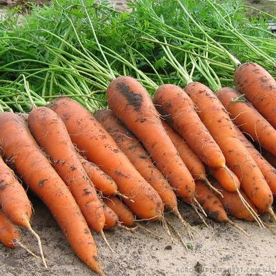 Семена моркови Элеганза F1, 100 000 семян (1.8-2.0), Nunhems