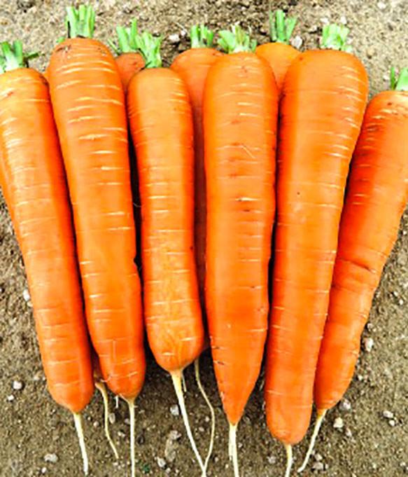 Семена моркови Колтан F1, 100 000 семян (1.6-1.8), Nunhems
