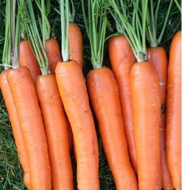 Семена моркови Лагуна F1, 25 000 семян (1.6-1.8), Nunhems