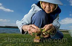 Секреты долгожителей Азии