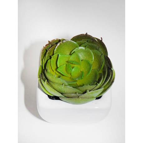 Искуственное растение, суккулент, фото 2