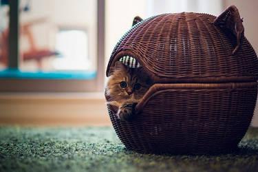 Выбираем мягкий домик, лежак для кошки