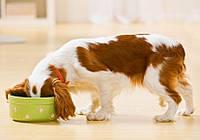 Рейтинг сухих кормов для собак: выбор корма для крупных и мелких пород