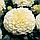 Бархатцы Эскимо прямостоячие, семена, фото 2