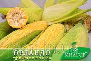 Цукрова кукурудза ОрландоF1, Sh2.