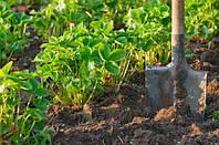 Выбор удобрения для клубники осенью