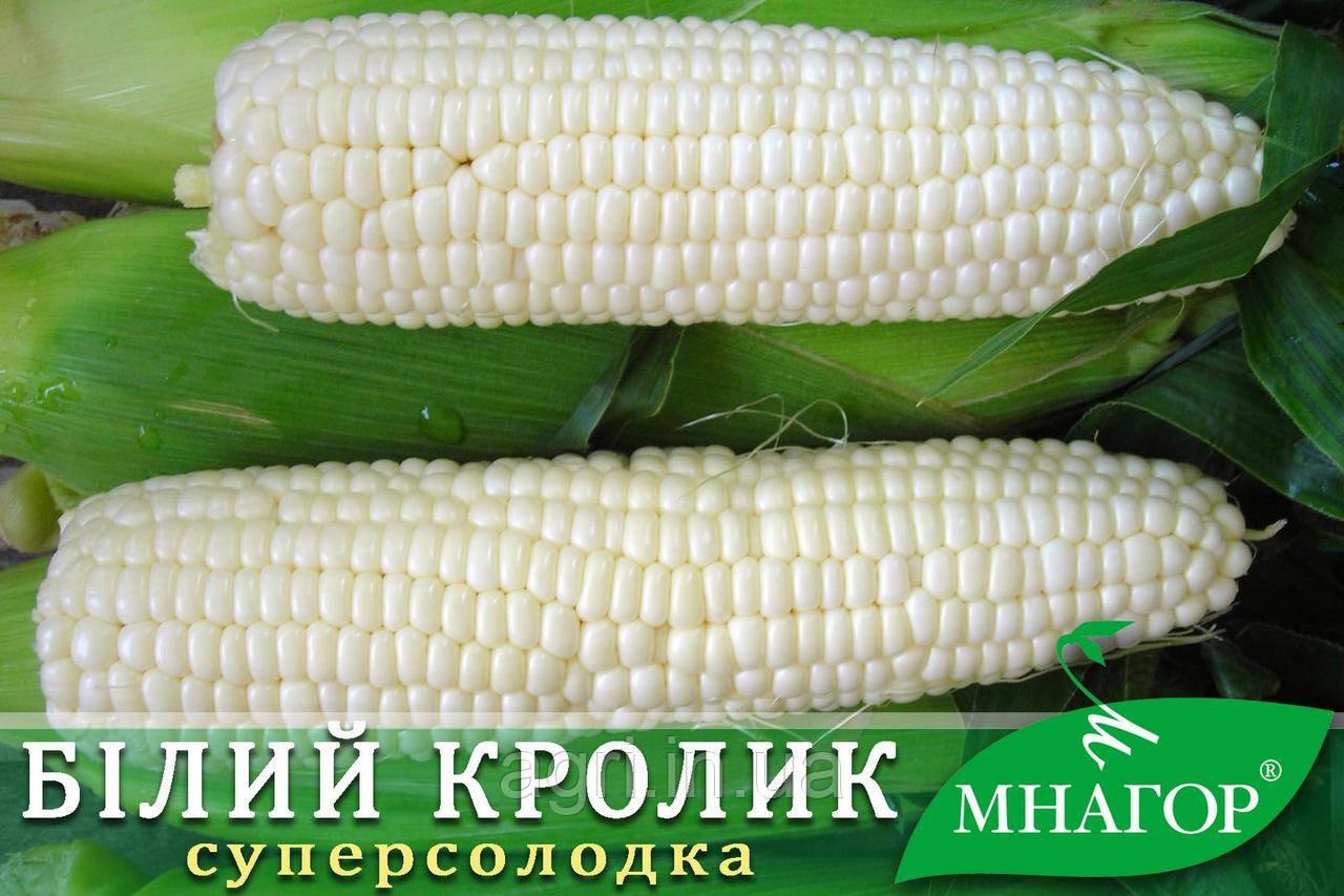 Цукрова кукурудза Білий Кролик F1, Sh2, молочно-біле зерно.
