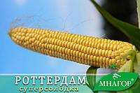 Солодка кукурудза Роттердам F1, Sh2., фото 1