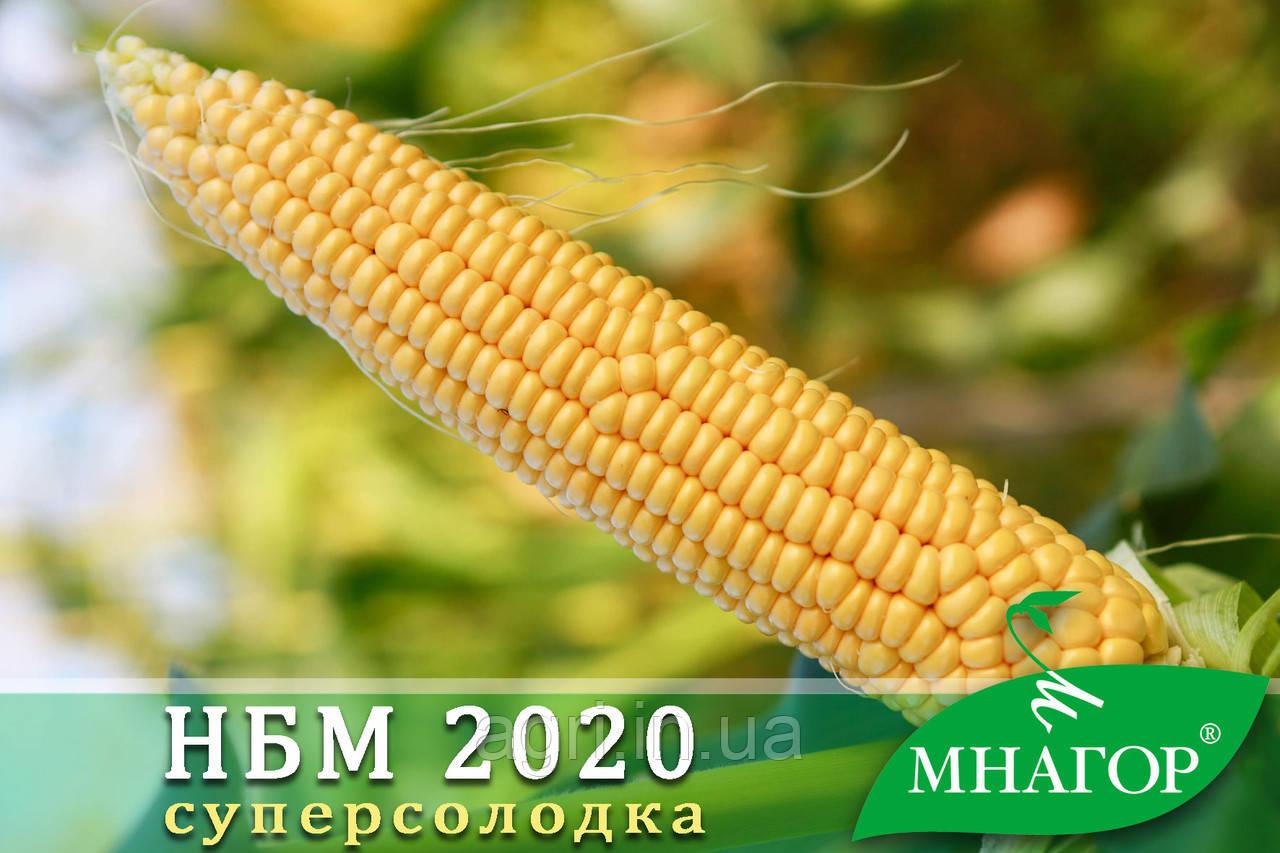 Цукрова кукурудза НБМ 2020 F1.