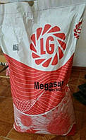Семена подсолнечника Мегасан, фото 1