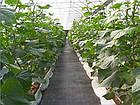 Агроткань на метраж 85 гр/м.кв 3,2 м, фото 4