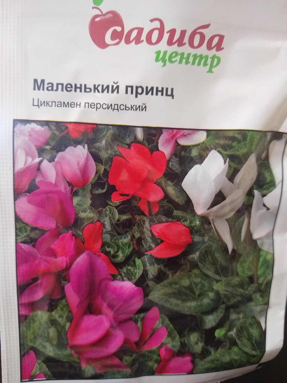 Цикламен персидский Маленький принц  смесь цветов 3 шт семян, Голландия