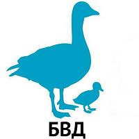 БВД КМ КК 35% молодняк гусей от 1 до 3 недель