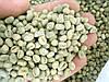 Кофе зеленый в зернах Танзания Пиберри  PB Utengule Estate (ОРИГИНАЛ), арабика Gardman (Гардман)