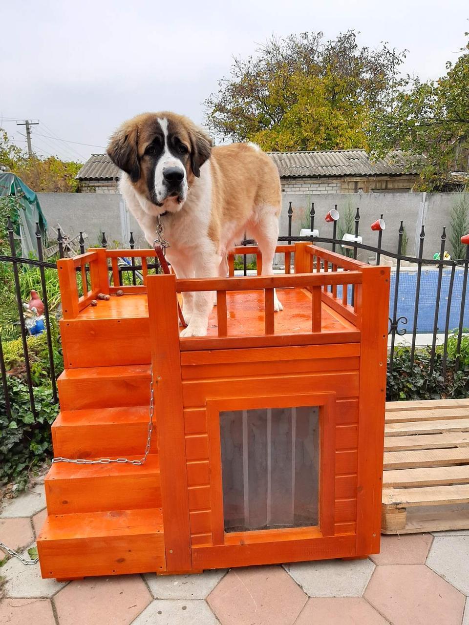 Двухэтажная будка для собак