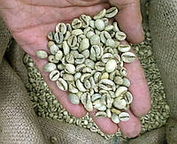 Кофе зеленый в зернах Вьетнам 18 (ОРИГИНАЛ), робуста Gardman (Гардман) , фото 1