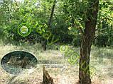 Сетка Антиблик маскировочная, камуфляжная 1.5*7м, фото 6