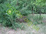 MULTICAM Сетка для маскировки, камуфляжная, 1.5*9м, фото 4