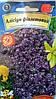 Алиссум Фиолетовый /0,2г/ (АгроВест) (в упаковке 10 пакетов)