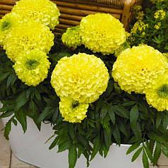 Семена Бархатцы Антигуа желтые F1 10 сем Cerny 5026