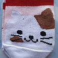 Носки женские котики красная полоска размер 36-41, фото 2