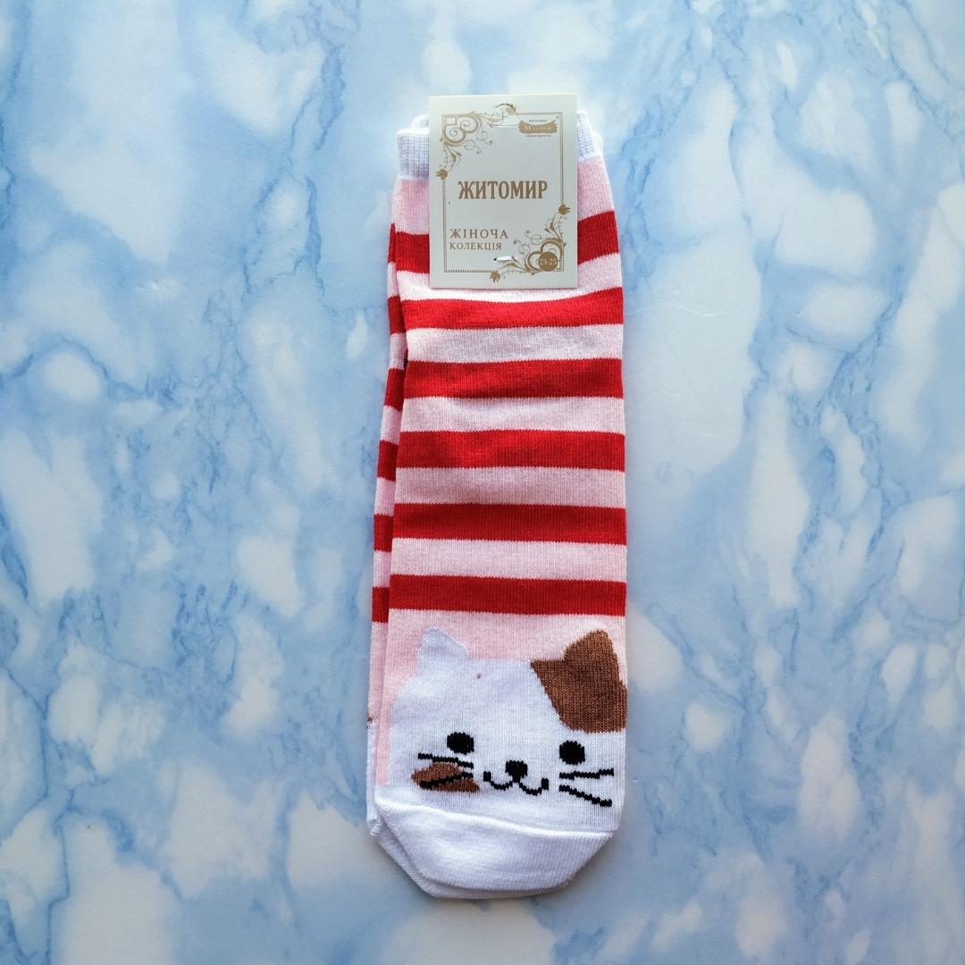 Носки женские котики красная полоска размер 36-41